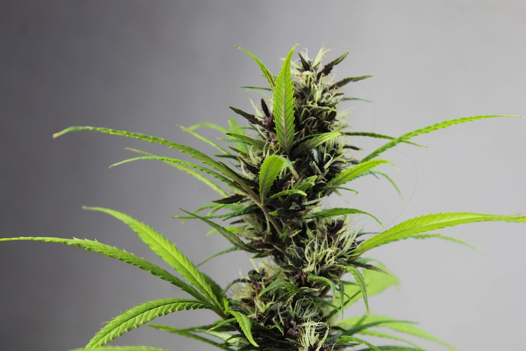what does thc stand for?